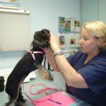 Less Stressful Vet Visit For Nervous Dog