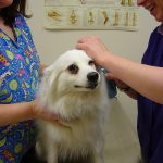 Vaccines: Protecting Your Pets
