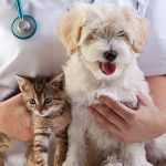 Animal Health And Husbandry: Dog Health Check